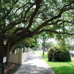 Cedars of Matanzas Condo